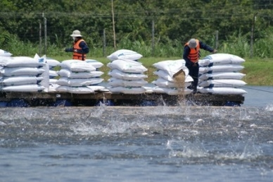 DONG THAP LEADS MEKONG DELTA IN PANGASIUS OUTPUT